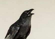 Portrait Of A Screaming Black ...