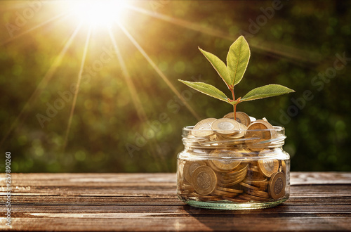Investment concept, small plant growing out from jar of coins with copy space Tableau sur Toile