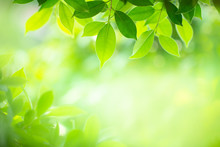 Green Nature Background. Closeup Natural View Of Green Leaf With Beauty Bokeh Background For Nature And Freshness