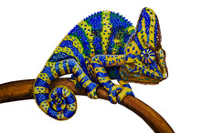 Oil Painting - Chameleon On A White Background.