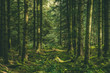 canvas print picture - Welsh Forest