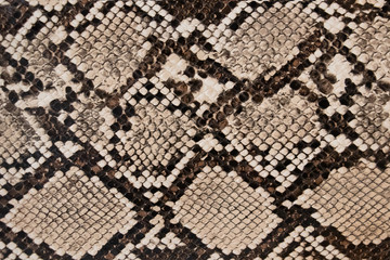 background of snake skin texture