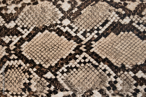 Foto background of snake skin texture