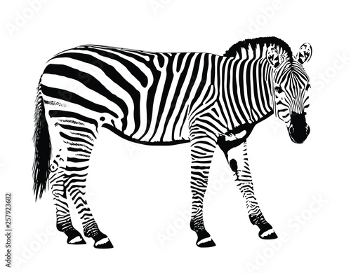Poster Zebra Zebra animal stencil mask vector illustration