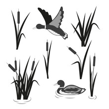 Vector Pond Set. Reeds And Duc...