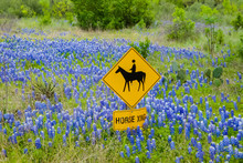 Horse Crossing Sign Surrounded...