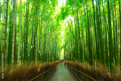 Foto op Canvas Bamboo Bamboo forest of Arashiyama near Kyoto, Japan