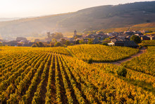 View Of Vineyard With Village Houses During Sunrise