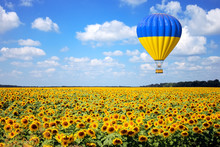 Hot Air Balloon With Flag Of Ukraine Fly Over Sunflowers Field. 3d Rendering