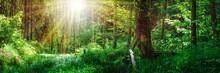 Panorama Landschaft, Wald Im F...