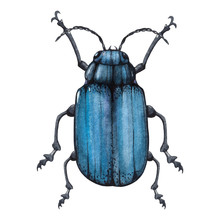 Blue Bug Watercolor Illustration Isolated