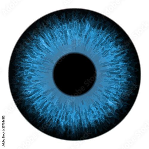 Garden Poster Iris Blue eye iris macro vector illustration