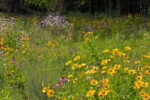 Michigan Roadside Flowers