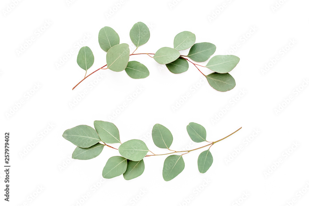 Fototapety, obrazy: Wreath frame made of branches, leaves eucalyptus isolated on white background. lay flat, top view