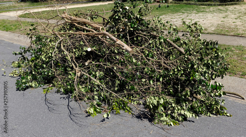Cut pile of pruned tree branches stacked against neighborhood street curb Fototapeta