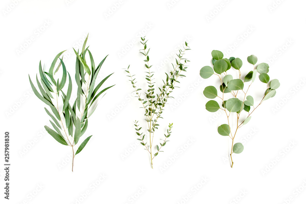 Fototapety, obrazy: Mix of herbs green branches, leaves eucalyptus and plants collection on white background. flat lay, top view