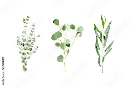 Mix of herbs green branches, leaves eucalyptus and plants collection on white background. flat lay, top view - 257983209