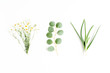 Leinwanddruck Bild - Green branches, leaves medicinal herbs: chamomile, eucalyptus, aloe, collection on white background. flat layout, top view