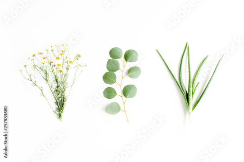 Fotografie, Obraz  Green branches, leaves medicinal herbs: chamomile, eucalyptus, aloe, collection on white background