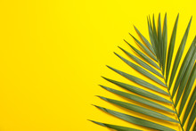 Beautiful Tropical Palm Leaf On Color Background, Space For Text