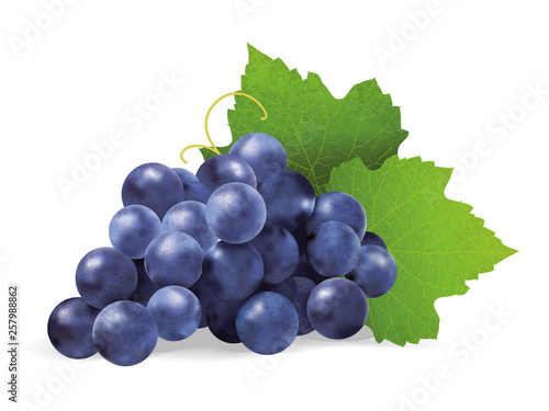 Fotografia Realistic illustration of a bunch of black grapes with green leaves