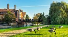 River Cam Near Kings College In The City Of Cambridge, United Kingdom And The Ducks Om The Foreground