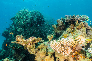 Naklejka na ściany i meble Coral reefs and water plants in the Red Sea, Eilat Israel