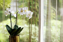 Orchid Decoration And Curtain Background