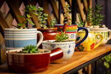 Real Reused, Recycled, Re-purposed Kitchen Crockery, Tea Pot And Cups As Plants Pots For House Plants And Succulents, Alternative To Plastic Pots, Sustainable Garden Concept