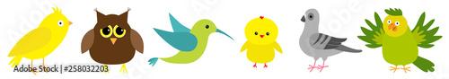 Photo Bird set line