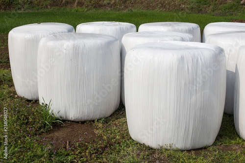 Cuadros en Lienzo Large silage bales wrapped in white plastic background