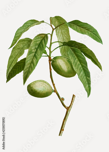 Photo Almond tree branch