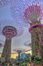 Singapore, Gardens By The Bay, HDR Image