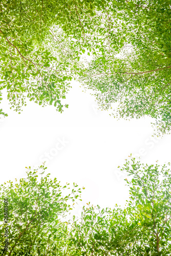 leaf an branch pattern to copy space and frame background are beautiful green - 258085601