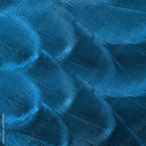 Photo sur Toile Les Textures Closeup blue peacock feathers for background