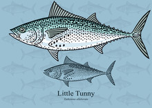 Little Tunny. Vector Illustration With Refined Details And Optimized Stroke That Allows The Image To Be Used In Small Sizes (in Packaging Design, Decoration, Educational Graphics, Etc.)