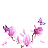 Fototapeta Motyle - magnolia branch, beautiful pink  flowers, flowers isolated on a white background, vintage