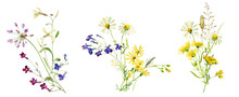Watercolor Multicolored Bouquets Of Wild Flowers