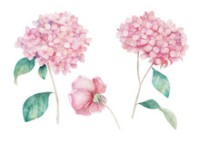 Watercolor Hand Drawn Set. Flower Hydrangea  And Rose Print. Botanical Isolated Design