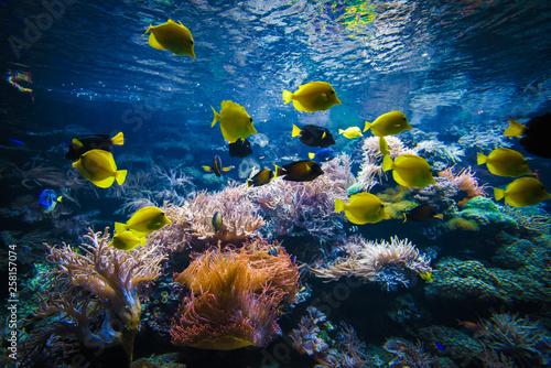 Foto op Plexiglas Koraalriffen tropical Fish on a coral reef