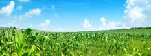 Bright Summer Sun Over Corn Fi...