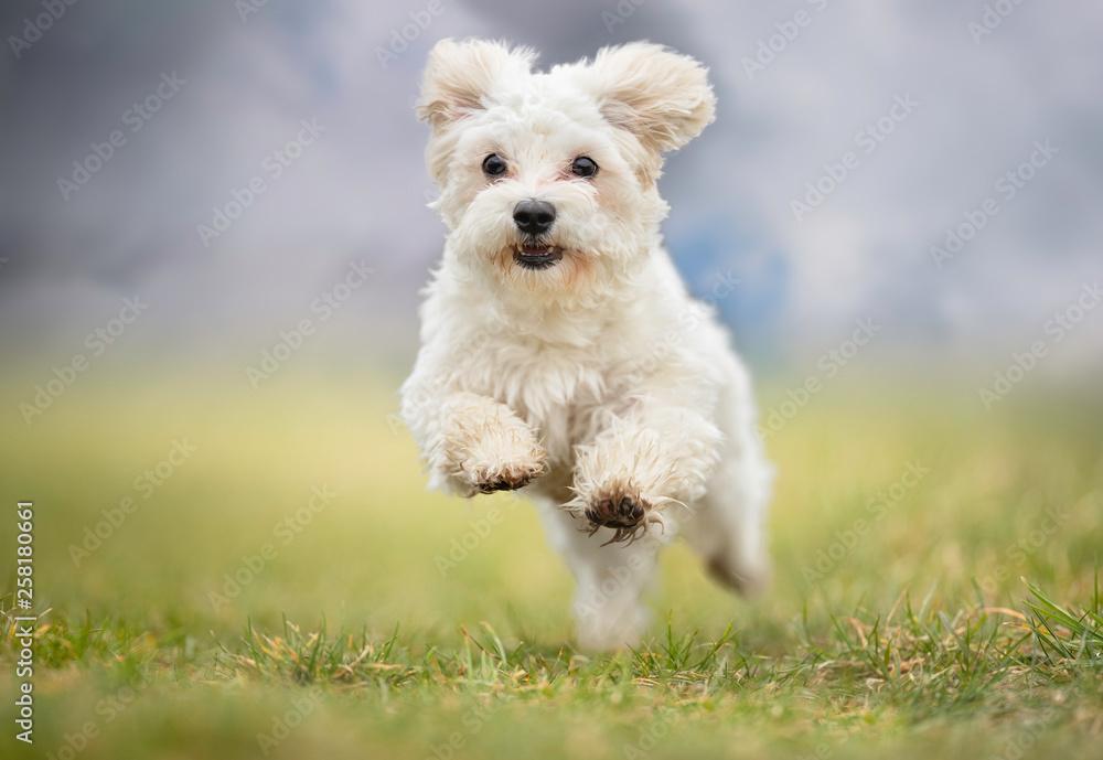 Fototapety, obrazy: Portrait of a dog