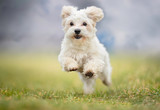 Fototapeta Zwierzęta - Portrait of a dog