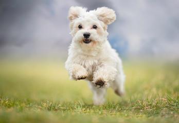 Panel Szklany Podświetlane Pies Portrait of a dog