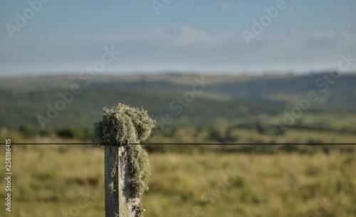 campo uruguay poste alambre alambrado musgo hongos sierras Canvas Print