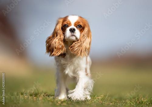 Valokuvatapetti Portrait of a dog