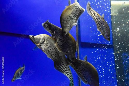 Photo Stands Coral reefs Fish in the aquarium of aquarium,