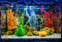 Wall Mounted Aquarium With Tro...