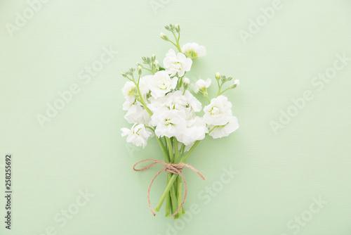 白いストックの花 Wallpaper Mural