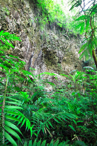 Massive rock cliffs in a dense and lush jungle in southern